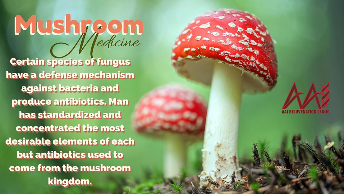 Powerful Mushrooms