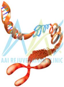 Lengthening Telomeres