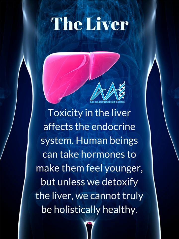 The liver and toxicity