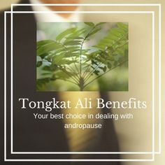 Tongkat Ali (Tonic Herb)
