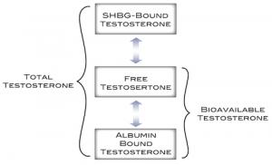 Understanding Your Testosterone