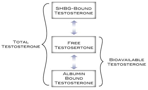 What is sex hormone binding globulin pic 24