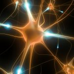Regrowth Neurons also called Neuro-Regeneration