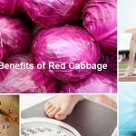 Cabbage (Red or Purple)