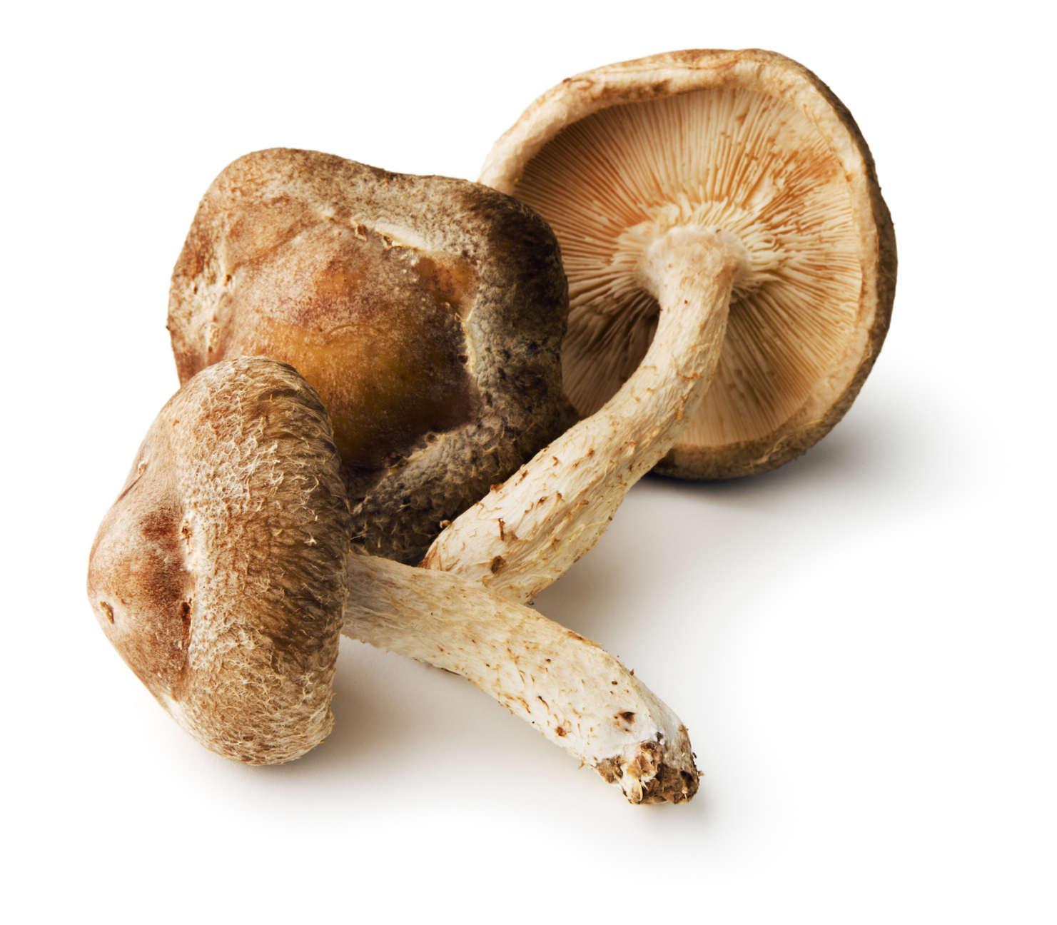 Shiitake Mushrooms, Edible Fungus Raw Vegetable Food of Japanese Cuisine