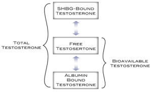 Understanding Your Testosterone