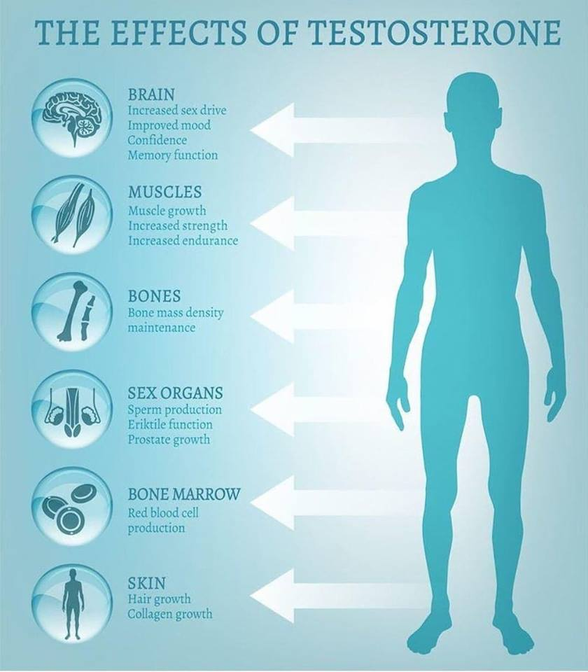 6 Effects of Testosterone in Your Body.